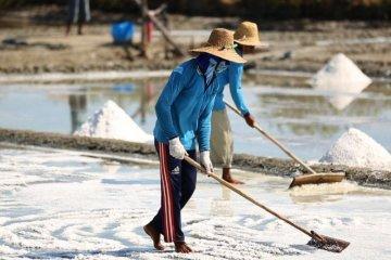 KPPU sarankan perubahan tata niaga garam