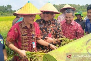 Panen raya padi di Desa Banyu Asin