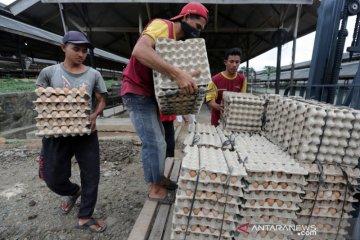 Produksi Telur Ayam Ras Lokal