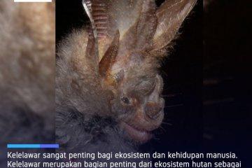 Virolog China  sebut kelelawar tapal kuda sebagai inang COVID-19