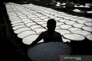 Penurunan produksi tepung Tapioka