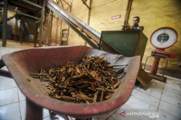 Pengolahan tanaman Kina