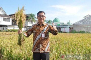 Distan Kalbar prediksi produksi beras surplus hingga Idul Fitri
