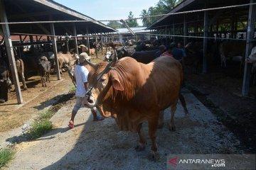Pasar hewan jelang tradisi
