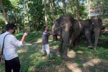 BKSDA inspeksi pemeliharaan gajah di Badung