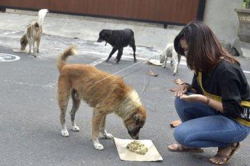 Relawan beri makan anjing liar saat pandemi COVID-19