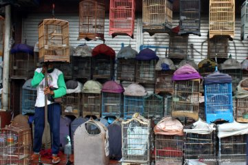 Pasar burung jadi wisata alternatif