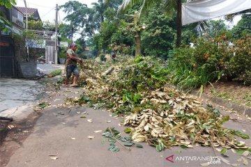 Penebangan pohon penghijauan di Kota Bogor