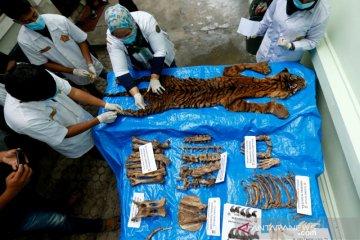 Identifikasi lanjutan barang bukti harimau sumatera