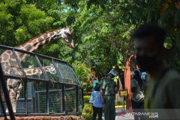 Maharani Zoo mulai buka kembali