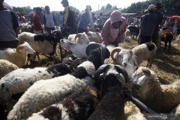 Pakistan dorong jamaah beli hewan kurban daring cegah lonjakan corona