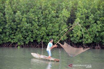 Tangkap udang dengan keramba jaring di hutan manggrove