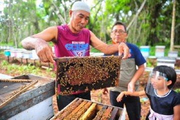 Budi daya lebah ternak