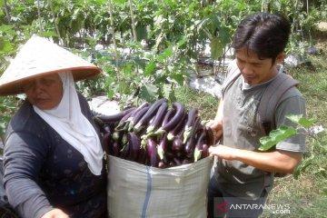 Harga sayuran di Rejang Lebong terjun bebas