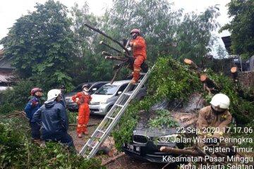 Pohon beringin tumbang timpa mobil mewah di Pasar Minggu