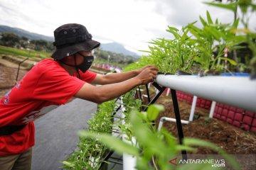 Pemkot Bandung buat kawasan lahan pertanian untuk edukasi ketahanan pangan