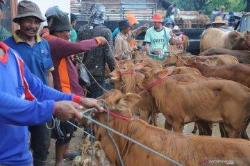 Harga sapi di Madura turun