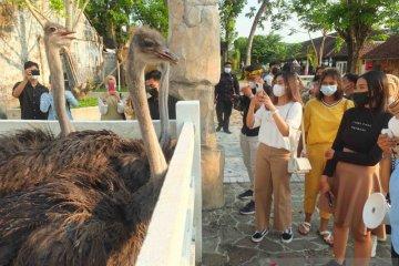 Jember Mini Zoo jadi wisata edukasi menarik di tengah pandemi