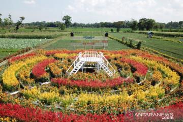 Taman bunga tengah sawah Desa Kedungrejo Lumajang yang instagramable