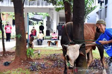 Pemkot Jakarta Timur sembelih 13 hewan kurban