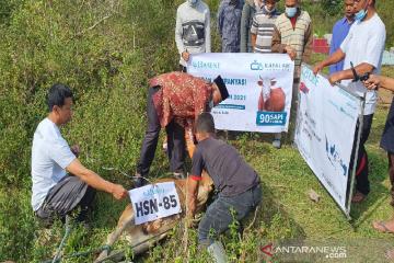 Muslim Eropa-Turki sumbang hewan kurban untuk dhuafa-yatim Aceh