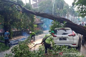 Jakarta Barat pangkas 1.068 pohon untuk antisipasi musim hujan