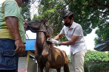 Pemkot Kediri periksa hewan di kebun binatang mini Paggora