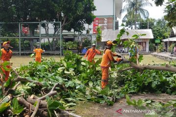 Pemkab Kepulauan Seribu antisipasi pohon tumbang pada musim hujan