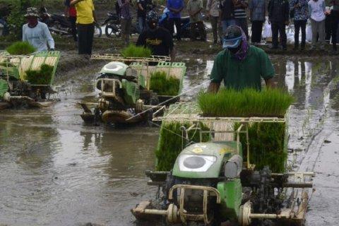 Penanaman padi menggunakan mesin