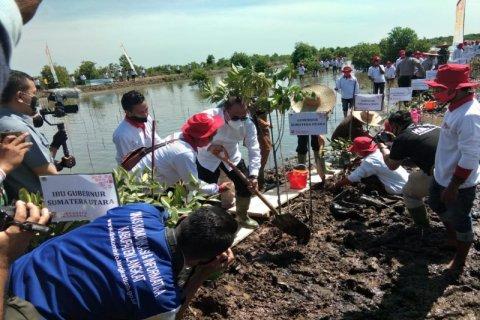 Kementerian LHK: Kerusakan hutan mangrove Indonesia sudah 19 persen