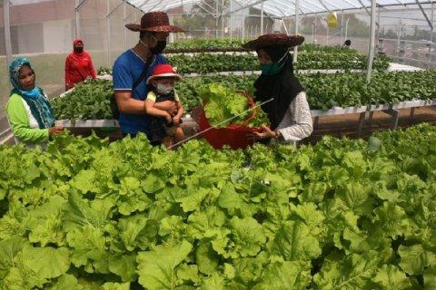 Peluang pertanian hidroponik
