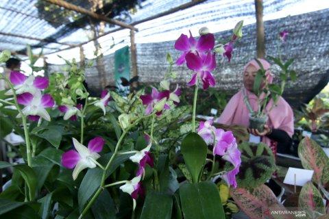 Pameran tanaman hias di Banyuwangi