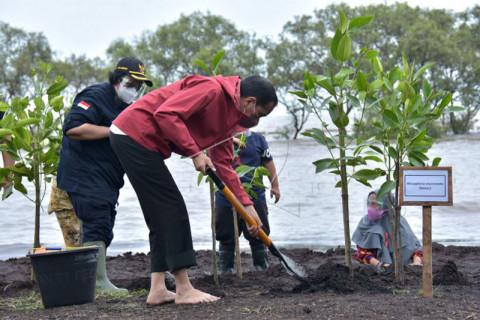 Presiden Jokowi menanam mangrove