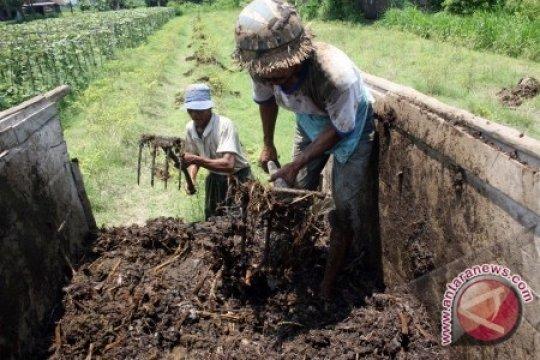 Dinas Pertanian Bangka Tengah Dorong Petani Gunakan Pupuk Kompos