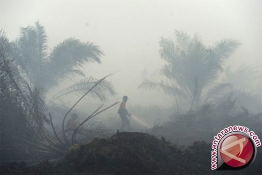 TNI/Polri Sulit Padamkan Kebakaran Lahan Gambut