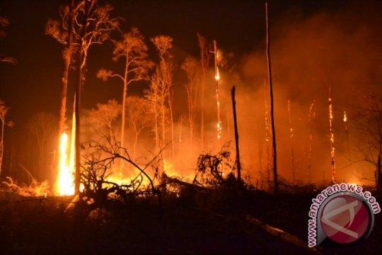 Babel Bentuk Tim Gabungan Penanggulangan Kebakaran Hutan