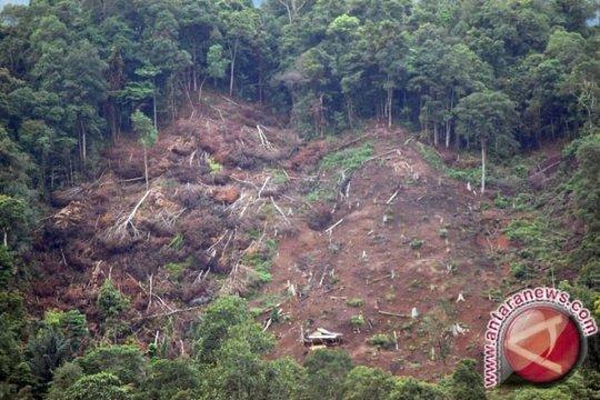 Polres Bangka Barat tindaklanjuti kasus pembalakan liar di Menumbing