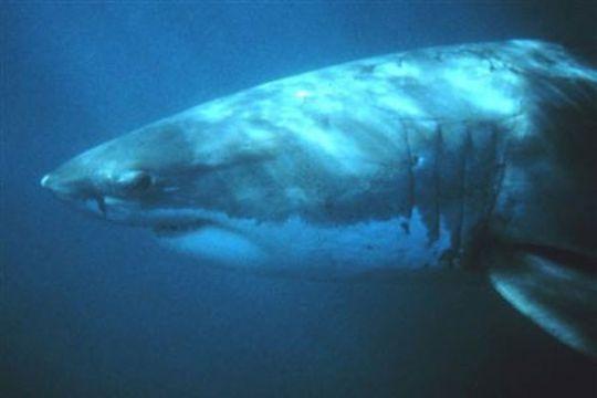 Tangan bocah 12 tahun putus akibat serangan hiu di resor Laut Merah Mesir