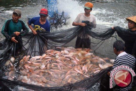 Petani Ikan Air Tawar Butuh Mesin Pembuat Pakan