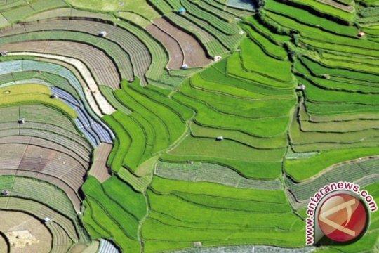 175 Hektare Lahan Tambang Emas Dijadikan Sawah