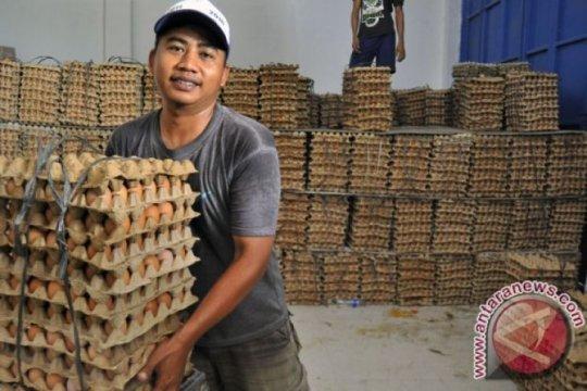 Harga telur ayam di Bangka Belitung turun