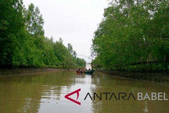 Kurau, lokasi asyik untuk edukasi mangrove