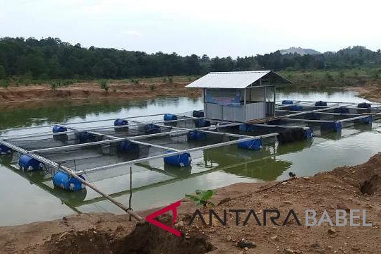 Desa mitra PT Timah bangun pabrik pakan ikan