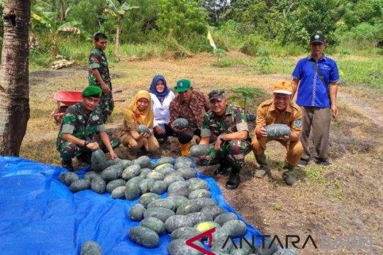 Dandim 0414 Belitung panen semangka di lahan tidur