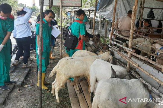 Distan Bangka temukan 30 persen kambing kurban kurang sehat (Video)