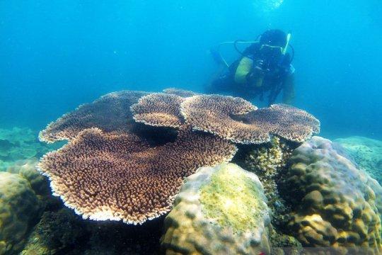 Kemenparekraf mengapresiasi pariwisata Belitung kembali menggeliat
