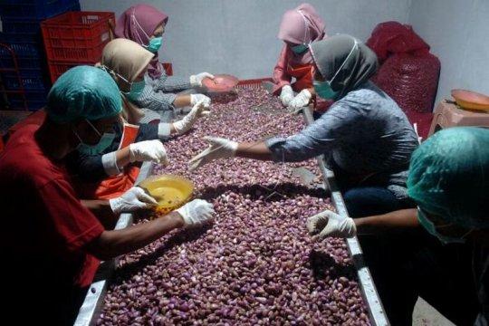Ekspor perdana bawang merah ke Arab Saudi Page 1 Small