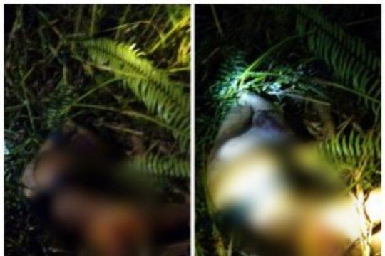 Seorang warga tewas dimangsa harimau di kawasan TNGL