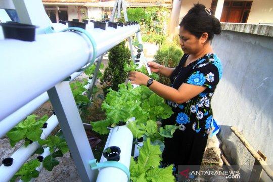 Budidaya Sayuran Hidroponik di Perkarangan Rumah