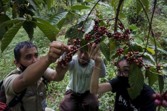 Edukasi kepada petani kopi Page 2 Small